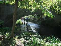源兵衛川の写真